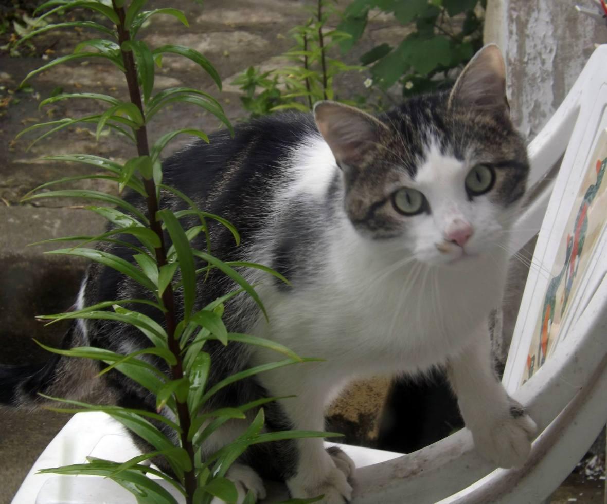 Louka, chat à parrainer