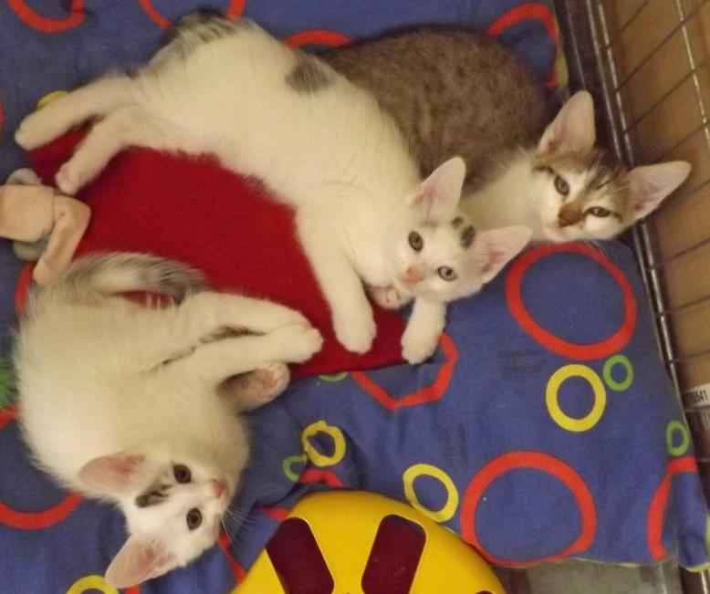 Les chatons de Lexie
