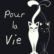 Chats à adopter
