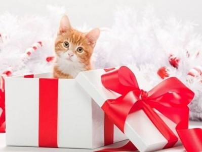Cadeau chat