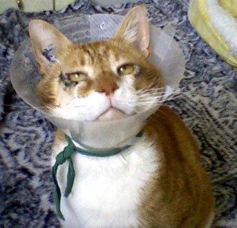 Kaleb, chat à parrainer