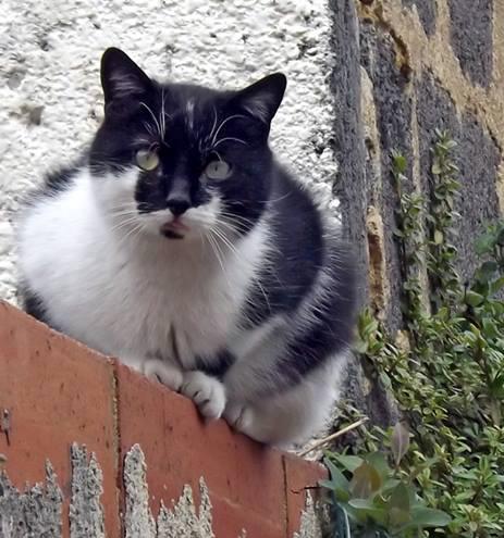 Roman, chat à adopter