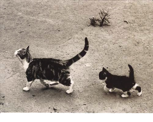 Sauvetages chats
