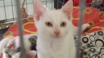 Shiro, chaton de Loïs