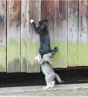 Solidarité chats
