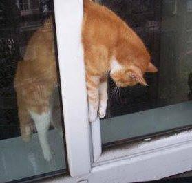 Fenêtres oscillo-battantes, pièges mortels pour les chats