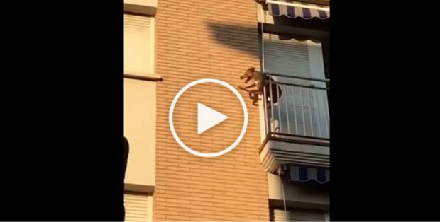 chien-saute-balcon-cover