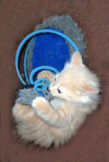 Hermès, chaton heureux