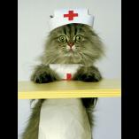 chat vétérinaire appel dons