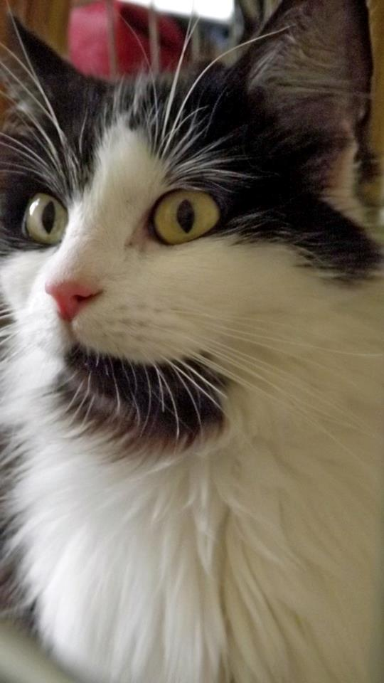 chatte photo Close up