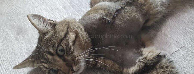 Chat Milo amputé à cause d'un piège en pleine rue