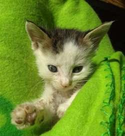 Yoda chaton en danger sauvé d'un chantier