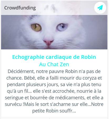 Collecte pour régler l'échographie cardiaque de Robin, chatte blanche aux yeux vairons
